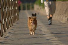 Zakaz wypuszczania psów luzem