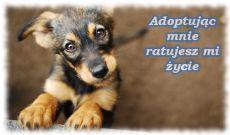 adoptuj zwierzaka