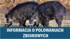 Informacja o polowaniach zbiorowych na terenie Gminy Drużbice