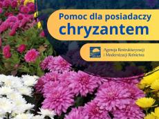 b_230_0_16777215_00_images_dla_mieszkancow_aktualnosci_20201105_kwiaty_chryzantemy.png